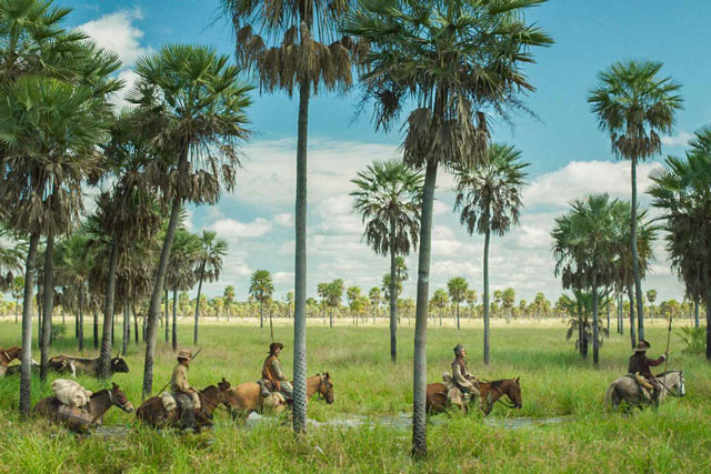 a scene of south american grasslands with four riders on horses amongs palm trees